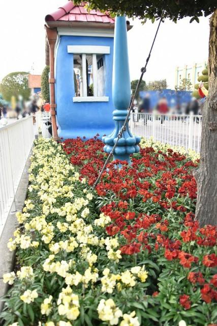 f:id:flowerTDR:20200205090619j:image