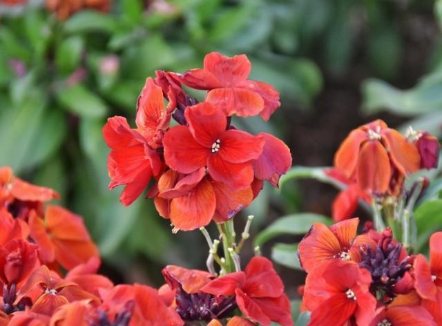 f:id:flowerTDR:20200205091406j:image