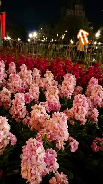 f:id:flowerTDR:20200212125027j:image