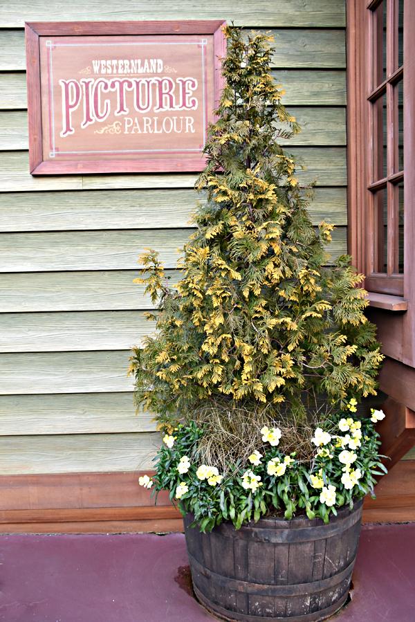f:id:flowerTDR:20200213085129j:plain