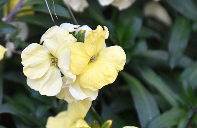 f:id:flowerTDR:20200213085149j:plain