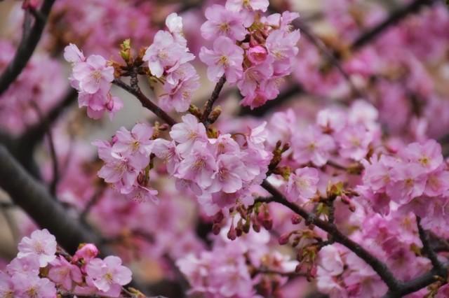 f:id:flowerTDR:20200214135642j:image