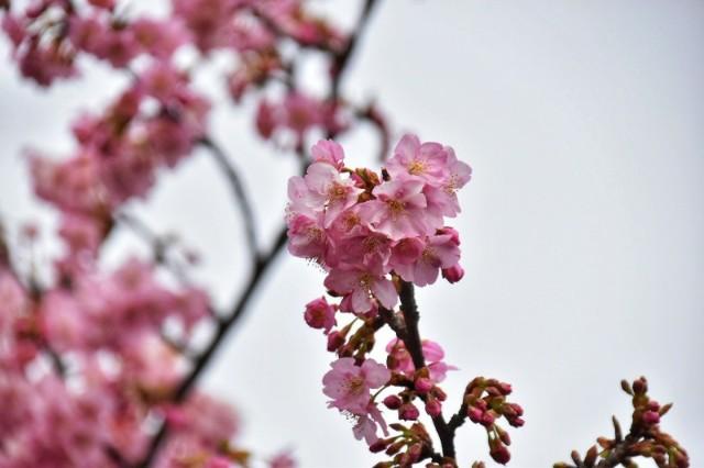 f:id:flowerTDR:20200214135649j:image