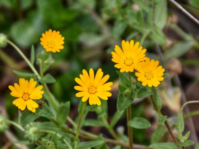 f:id:flowerTDR:20200218071953j:image