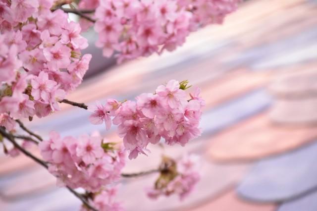 f:id:flowerTDR:20200220122443j:image