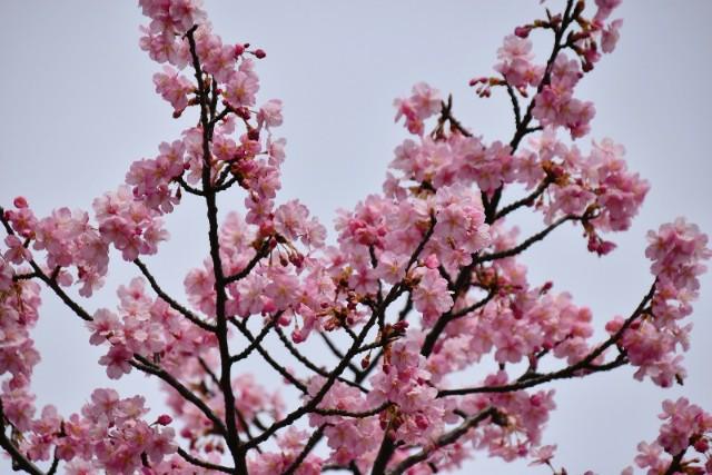 f:id:flowerTDR:20200221125330j:image