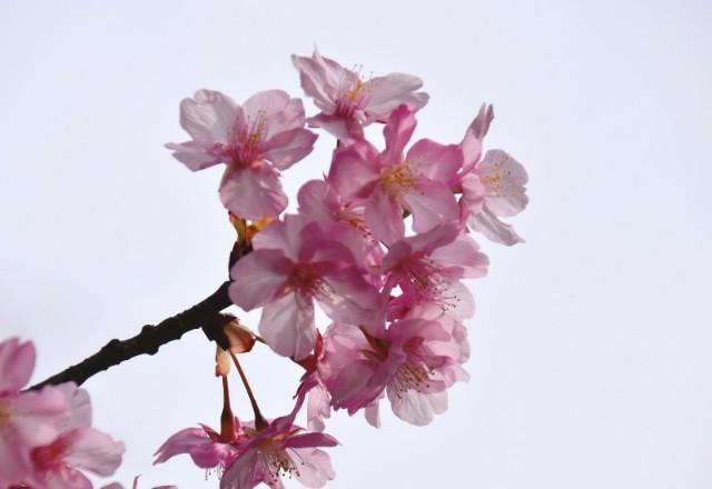f:id:flowerTDR:20200221125337j:image