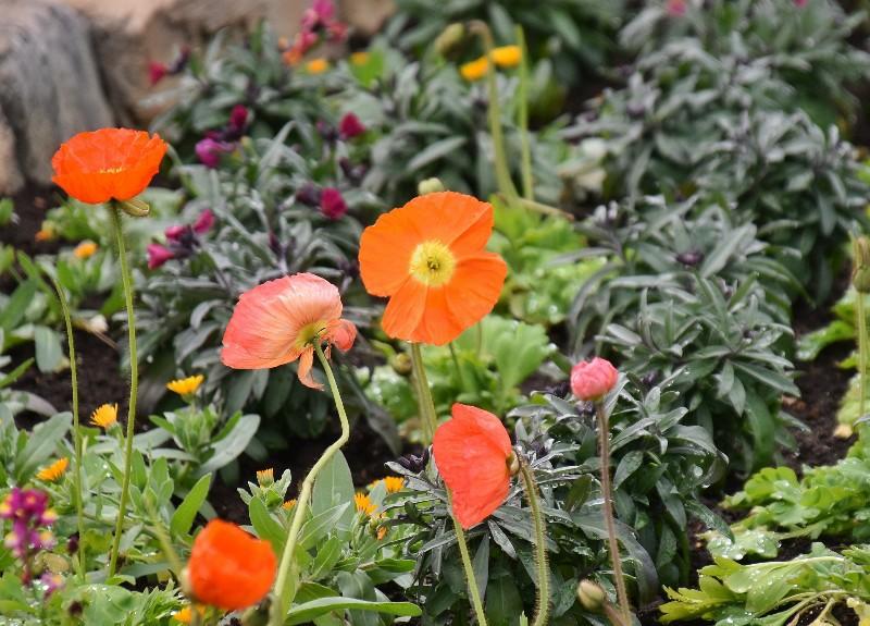 f:id:flowerTDR:20200223122510j:image