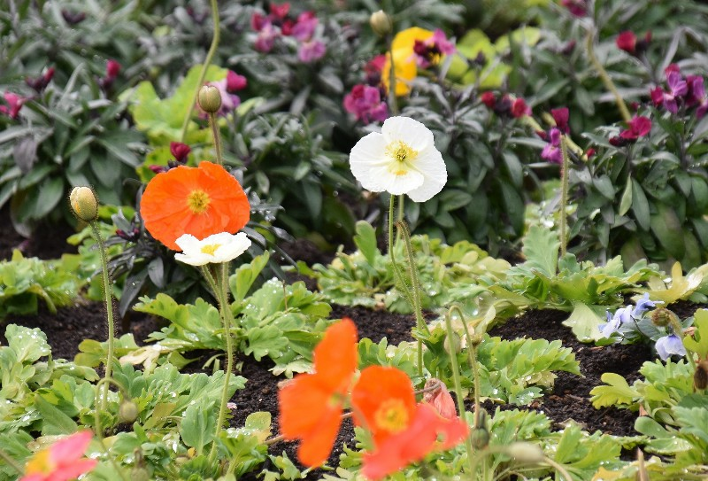 f:id:flowerTDR:20200223122517j:image