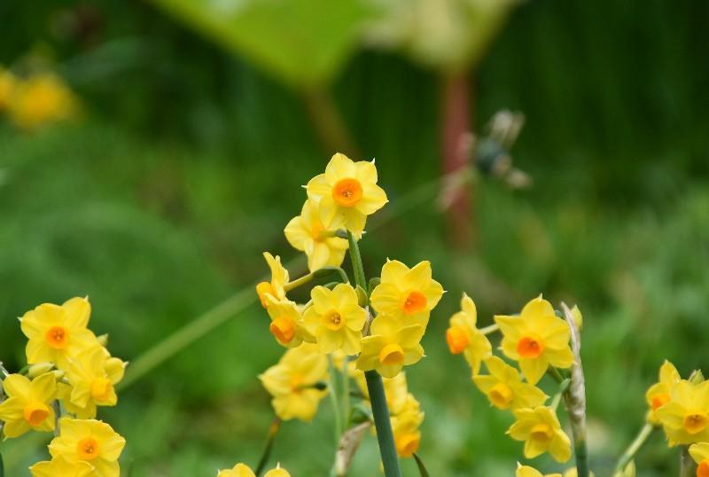 f:id:flowerTDR:20200224090817j:image