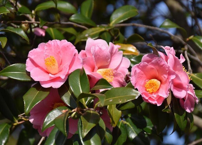 f:id:flowerTDR:20200228145440j:plain