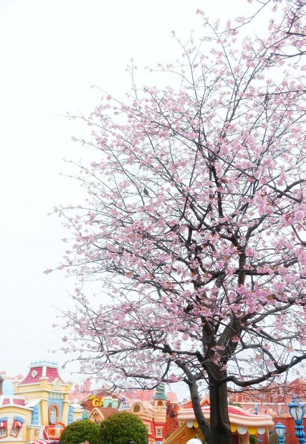 f:id:flowerTDR:20200229073643j:image