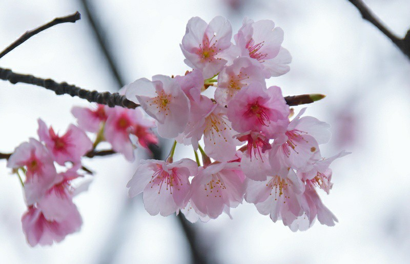 f:id:flowerTDR:20200229073653j:image