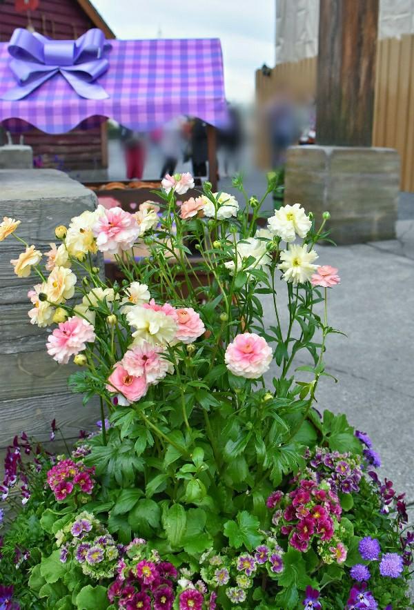 f:id:flowerTDR:20200301094654j:image