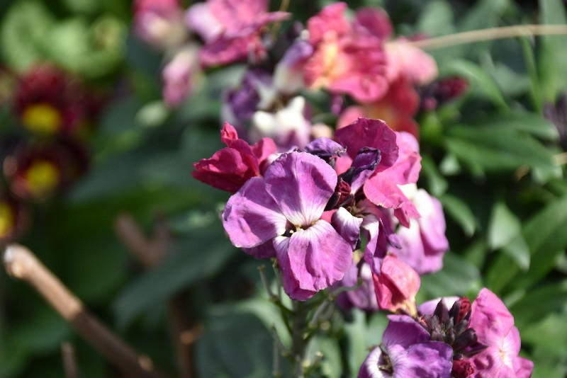 f:id:flowerTDR:20200303093125j:image