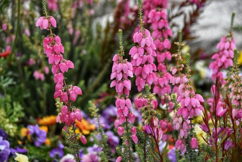 f:id:flowerTDR:20200304090955j:image