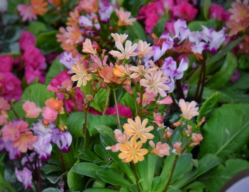 f:id:flowerTDR:20200306110845j:image