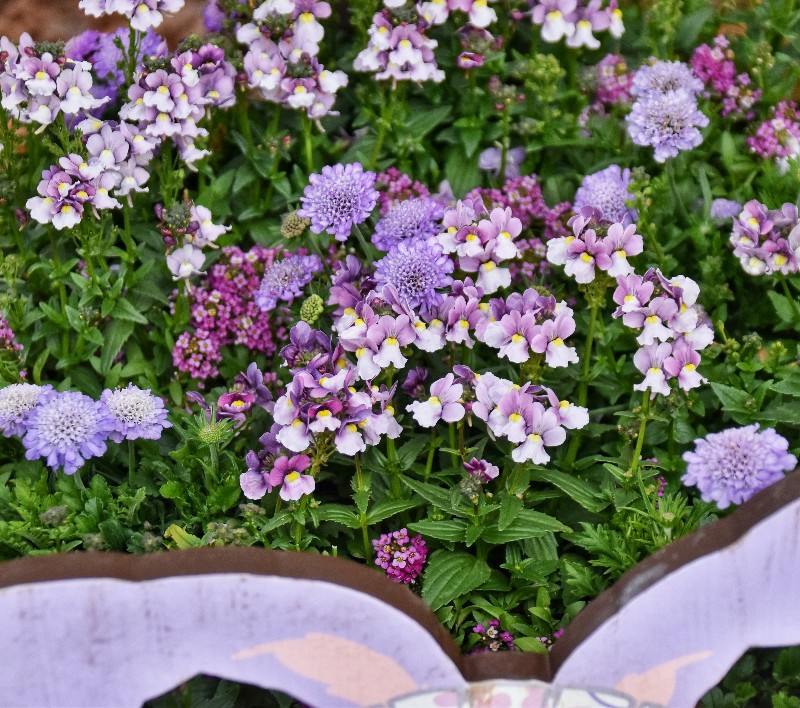 f:id:flowerTDR:20200306110856j:image