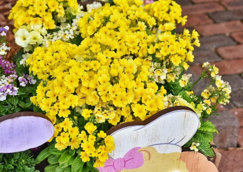 f:id:flowerTDR:20200306110917j:image