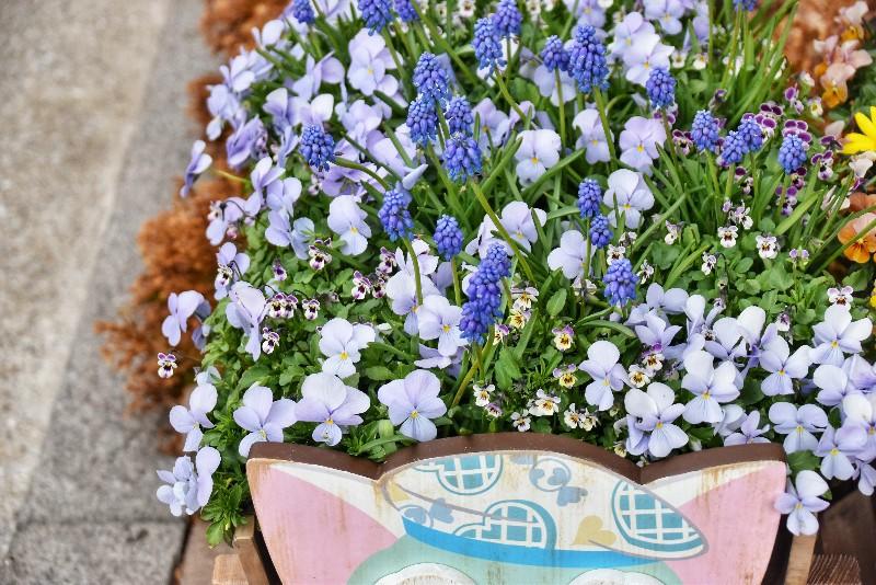 f:id:flowerTDR:20200307124652j:image