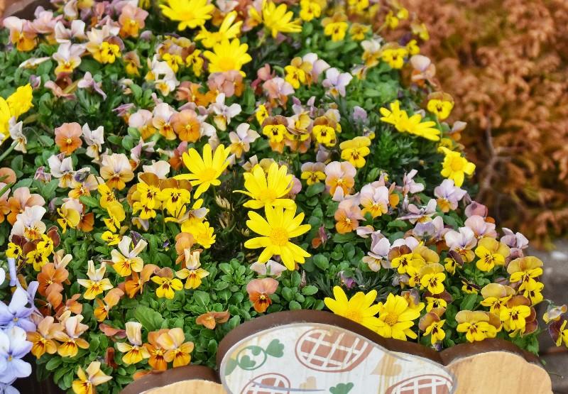 f:id:flowerTDR:20200307124714j:image