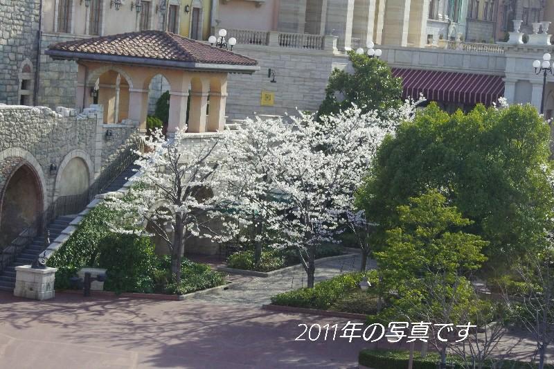 f:id:flowerTDR:20200311072934j:image