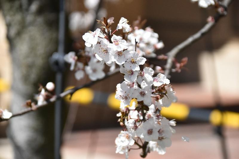 f:id:flowerTDR:20200312074043j:image
