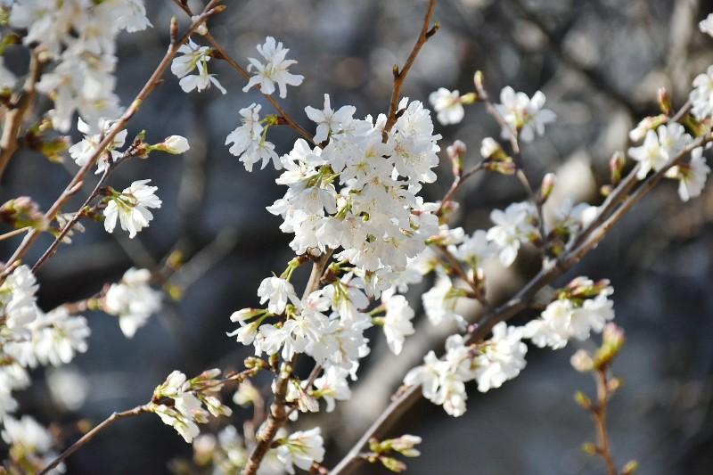 f:id:flowerTDR:20200318001528j:image