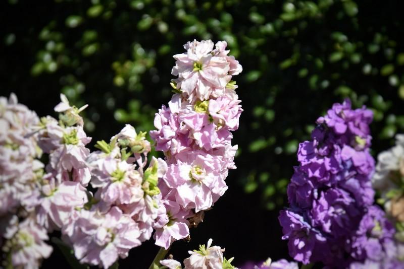 f:id:flowerTDR:20200321100657j:image