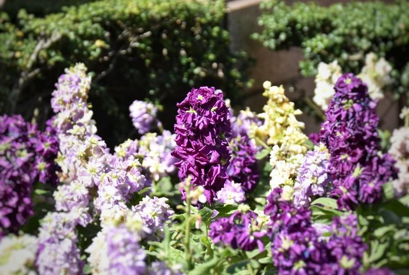 f:id:flowerTDR:20200321100709j:image