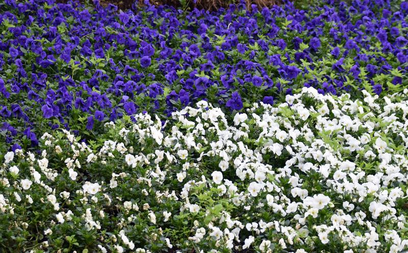 f:id:flowerTDR:20200322130037j:plain