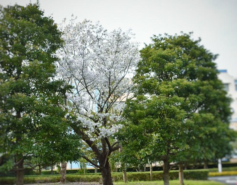 f:id:flowerTDR:20200324004828j:image