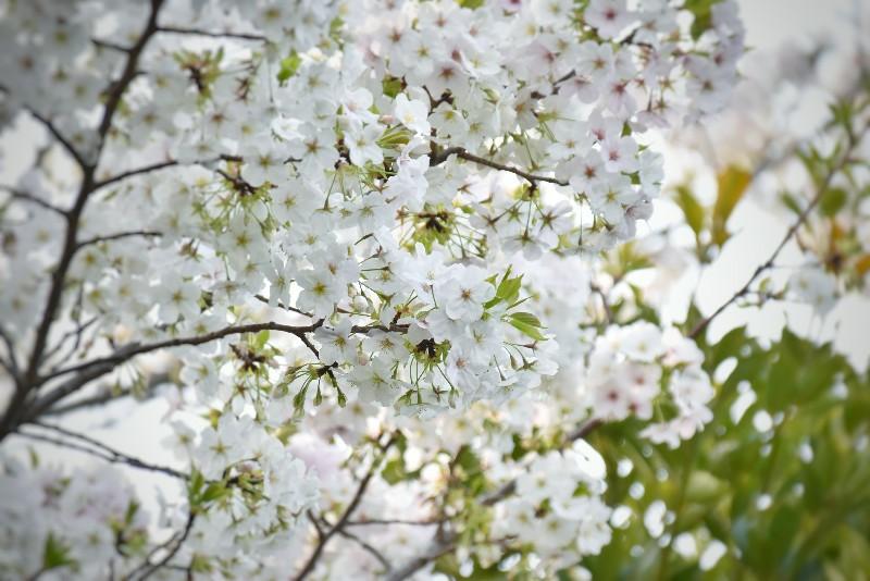 f:id:flowerTDR:20200324004835j:image
