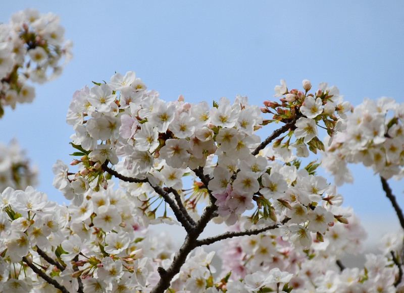f:id:flowerTDR:20200325092645j:image