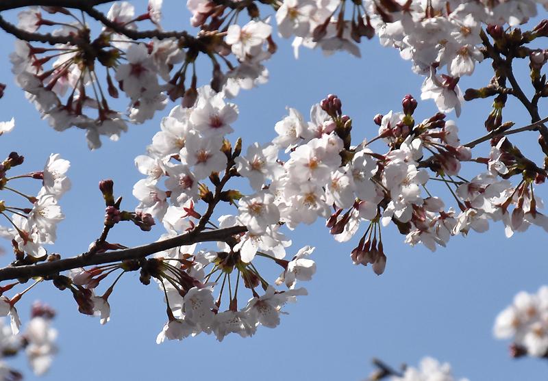 f:id:flowerTDR:20200327084952j:plain