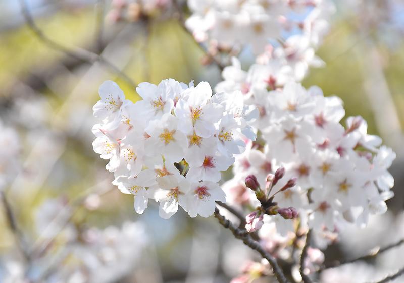 f:id:flowerTDR:20200327085001j:plain