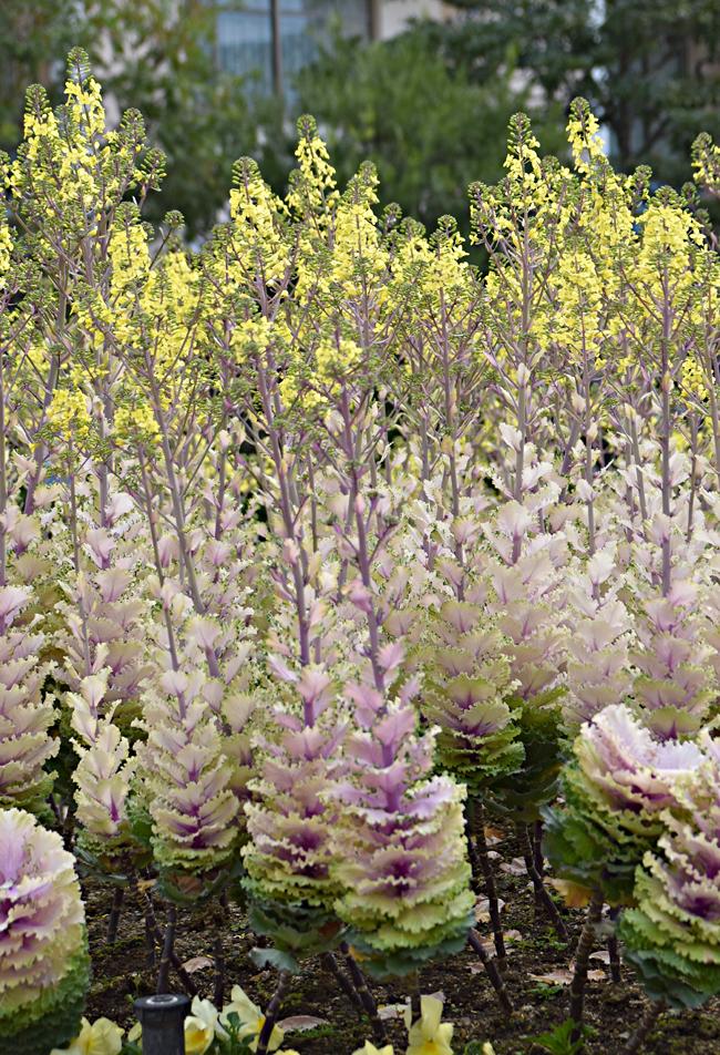 f:id:flowerTDR:20200327172250j:plain
