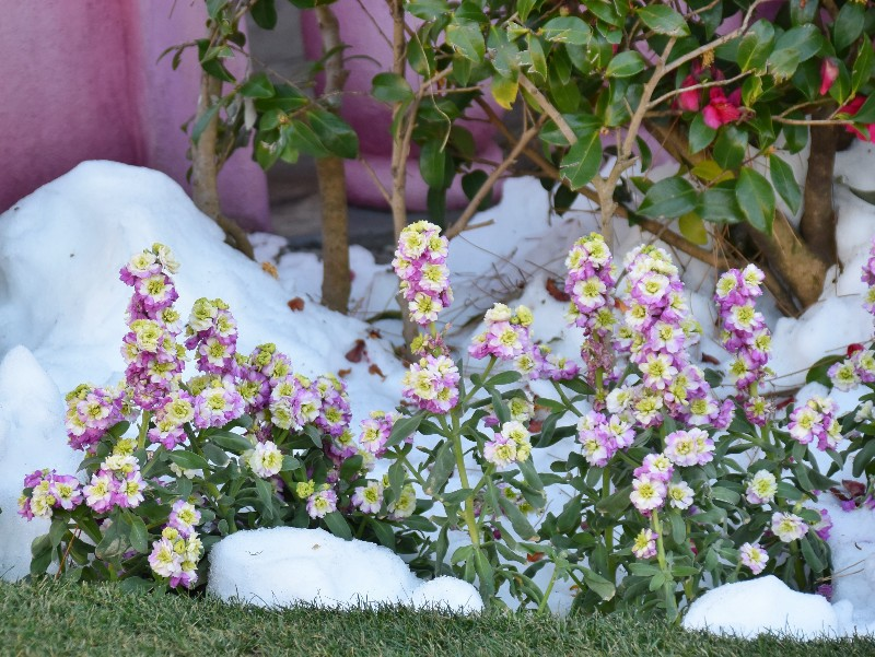 f:id:flowerTDR:20200329101430j:image