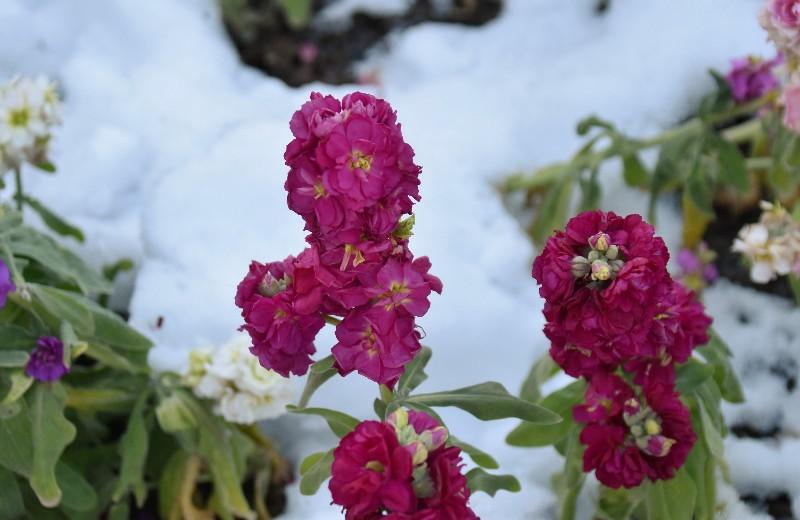 f:id:flowerTDR:20200329101439j:image