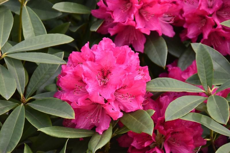 f:id:flowerTDR:20200331091359j:image