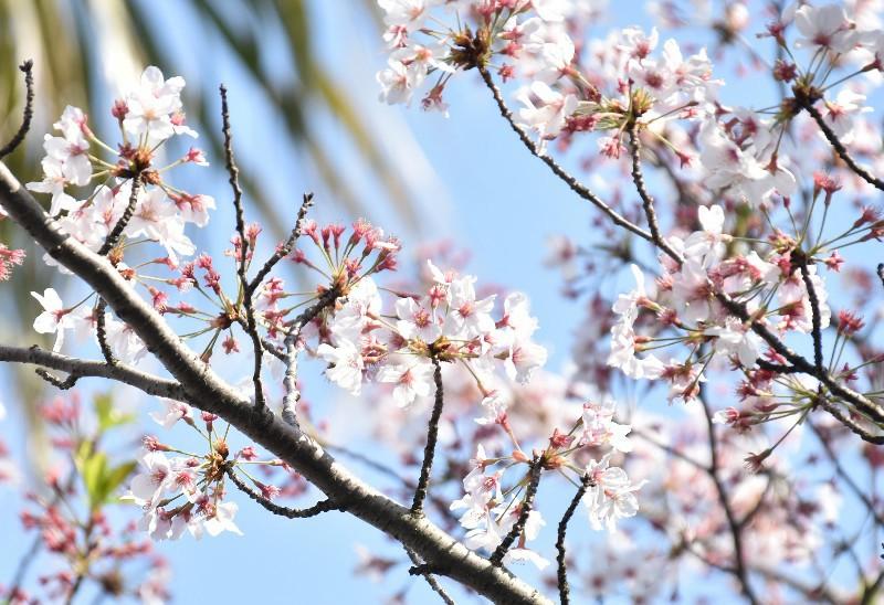 f:id:flowerTDR:20200409092436j:image