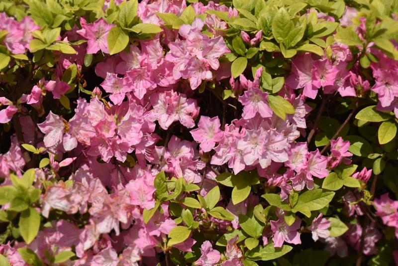 f:id:flowerTDR:20200409235048j:plain