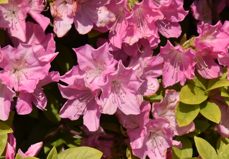 f:id:flowerTDR:20200409235059j:plain
