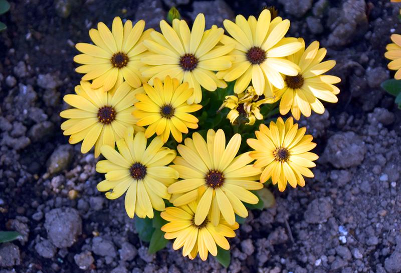 f:id:flowerTDR:20200411082100j:plain