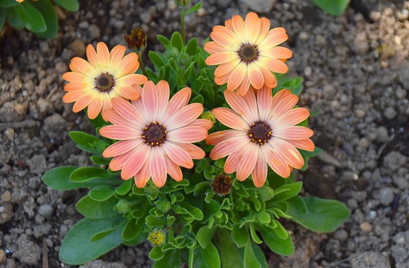 f:id:flowerTDR:20200411082120j:plain