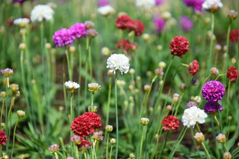f:id:flowerTDR:20200413090026j:image