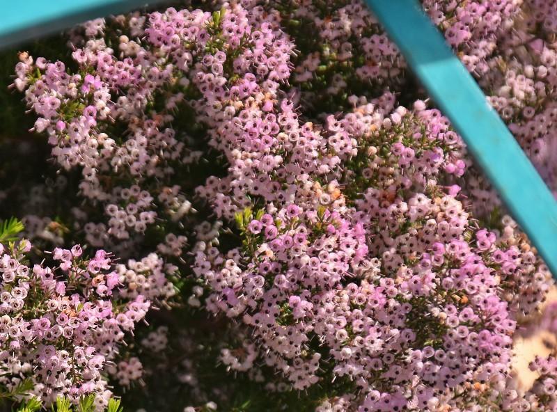 f:id:flowerTDR:20200414092003j:image