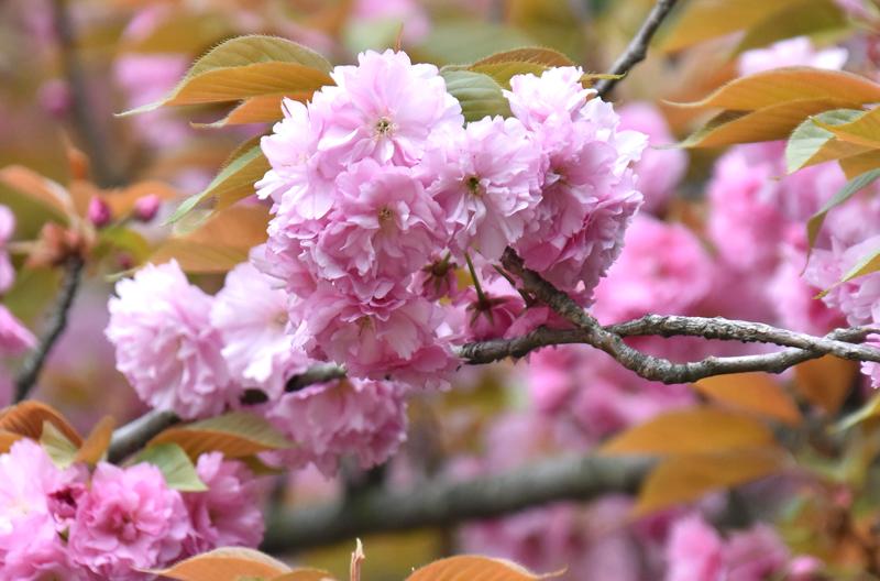 f:id:flowerTDR:20200416003012j:plain