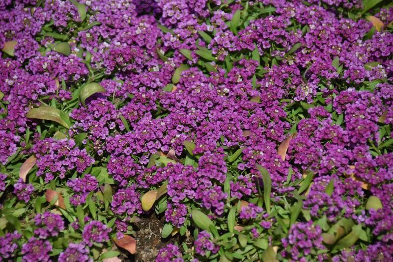f:id:flowerTDR:20200419075634j:image