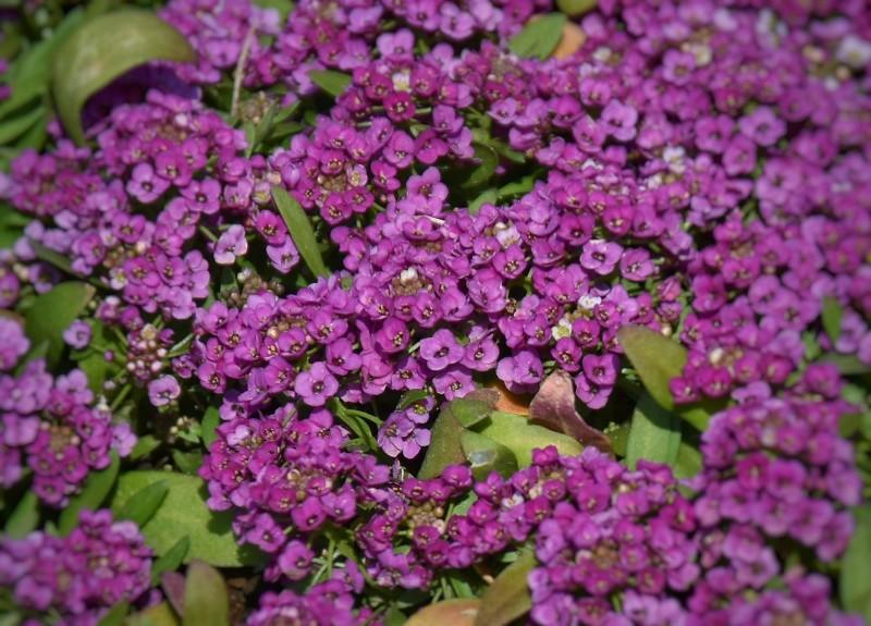 f:id:flowerTDR:20200419075645j:image
